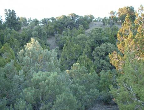 early Aug 2011, lower Silverado Cyn's main wash, Oquirrh Mtns